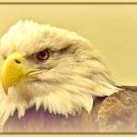 Eagle Painting at Dickerson Park Zoo!! (Adults only) 6-8